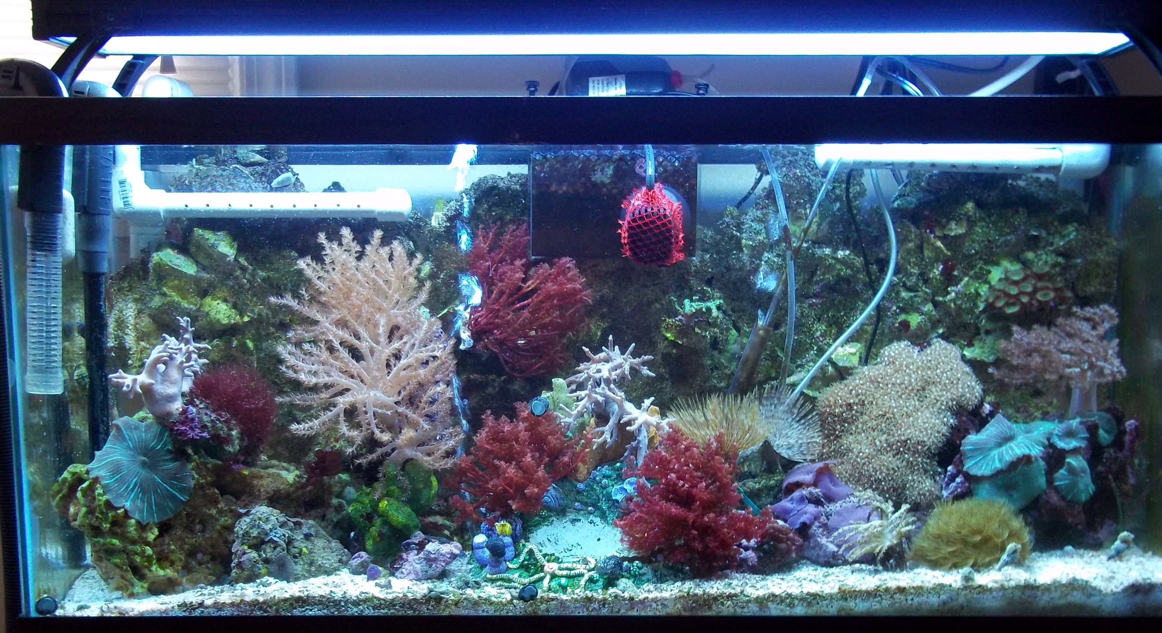 Planning a seahorse tank saltwaterfish forum for Saltwater fish tank for sale