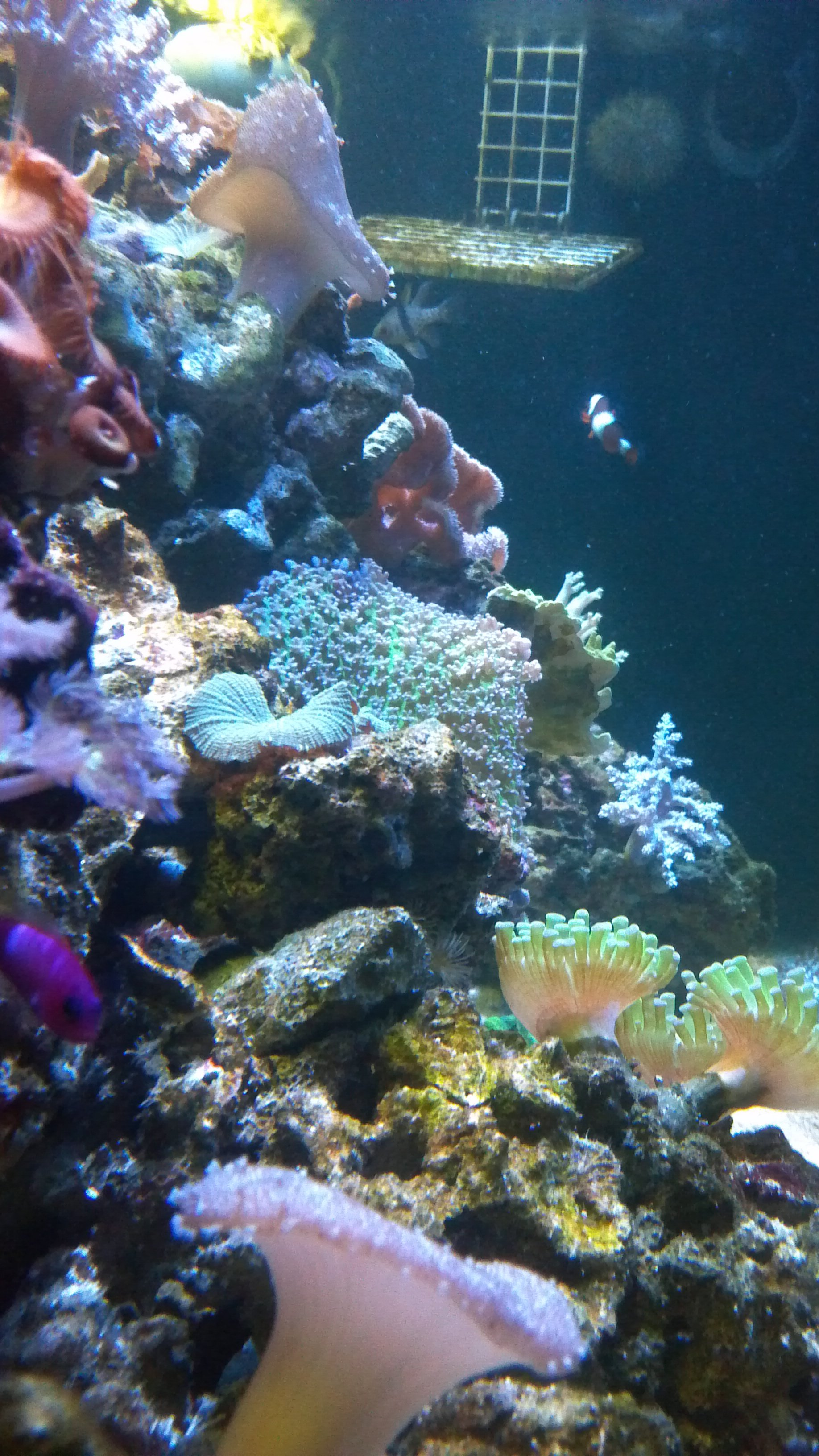 lighting for a 75g reef | Saltwaterfish com Forums for Fish