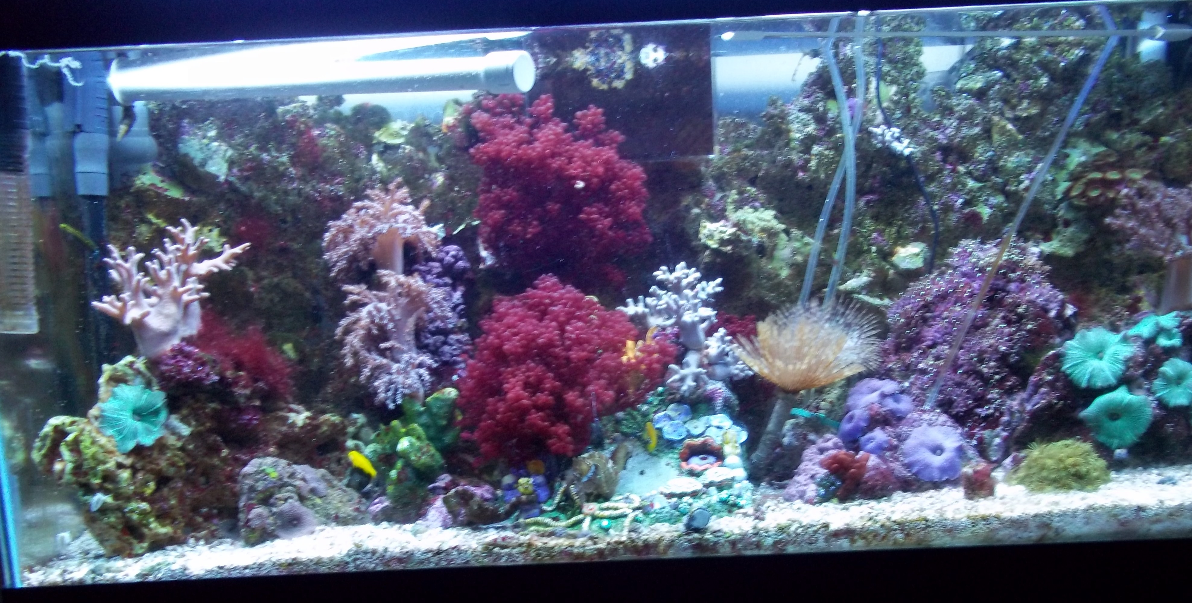 Seahorse help for a beginner saltwaterfish forum for Seahorse fish tank