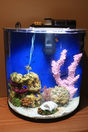 30 gallon tank pictures saltwaterfish forum On half moon fish tank