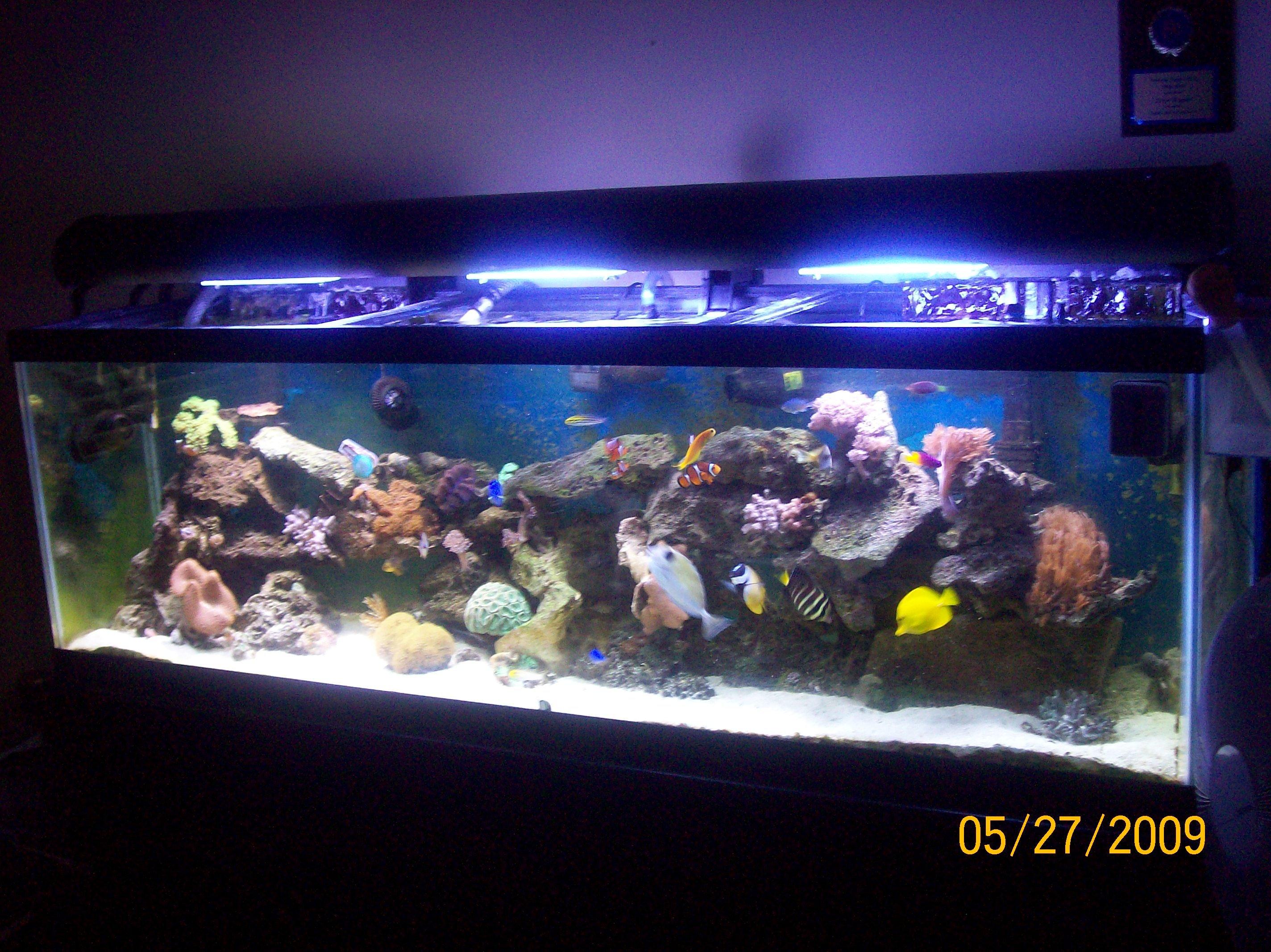28 Gallon Bow Front Build!! Saltwaterfish Forum