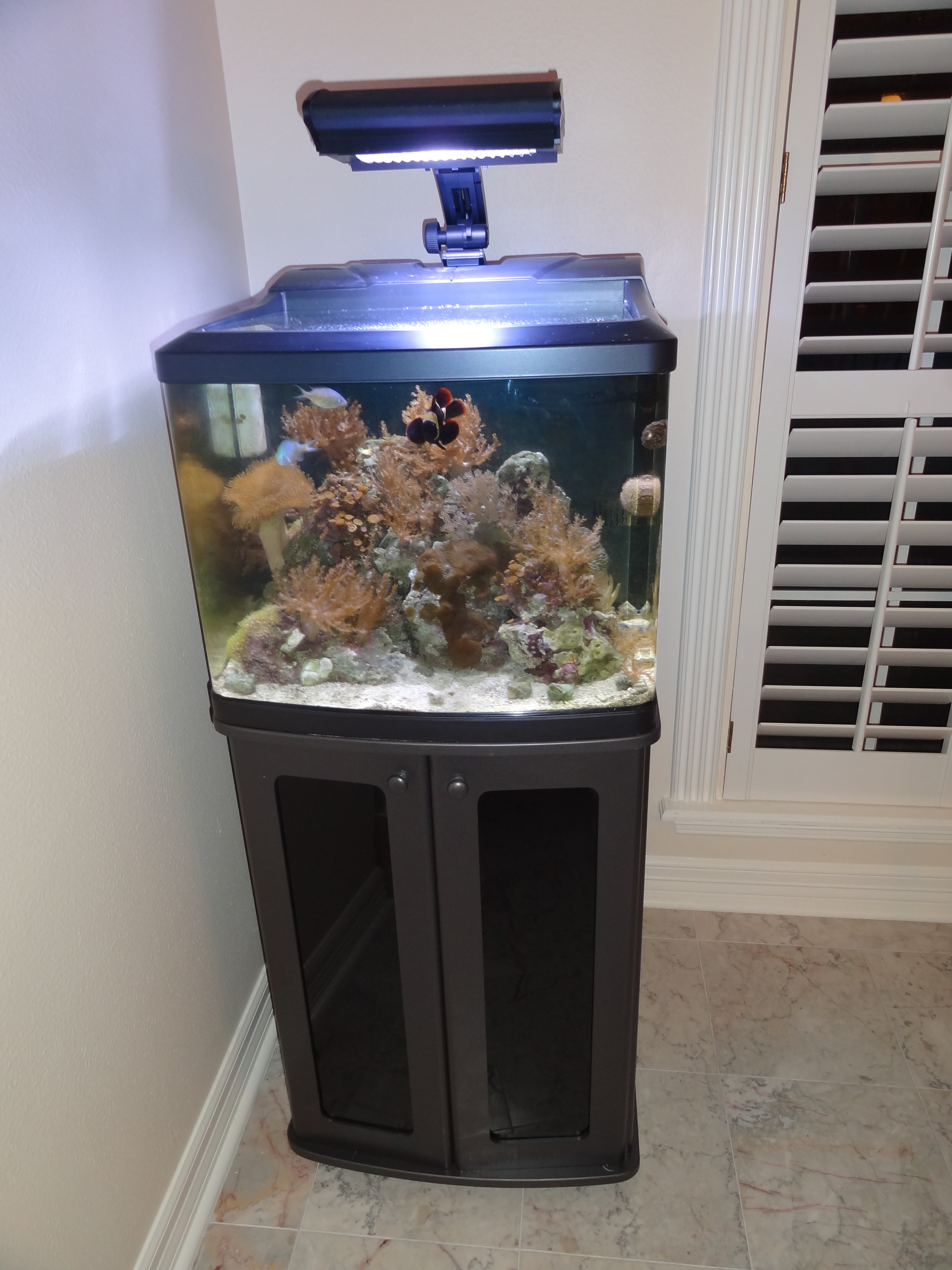 New 29 gallon biocube hqi with stand fish live rock and for 29 gallon fish tank stand