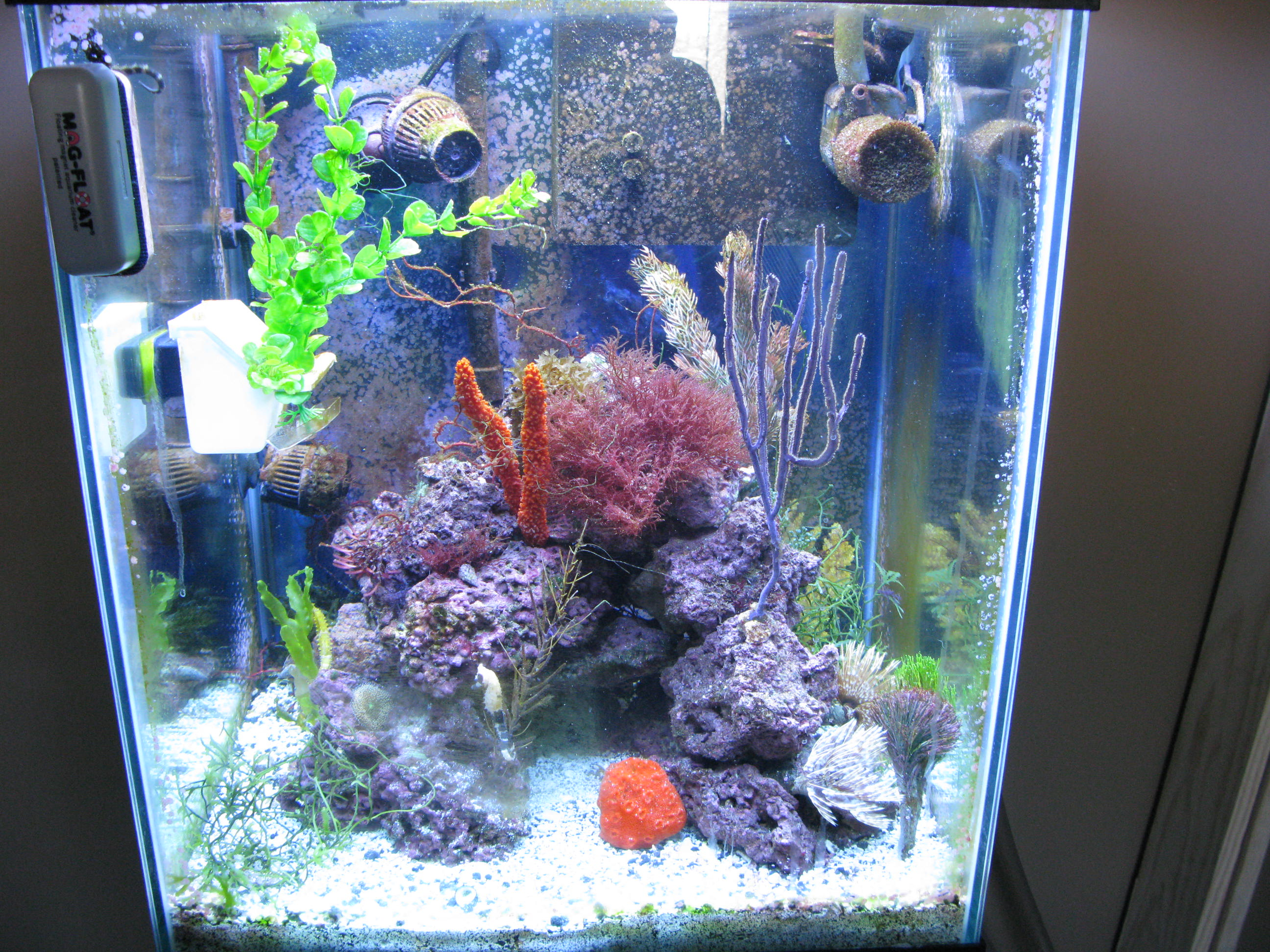 The full seahorse tank shot thread saltwaterfish forum for Seahorse fish tank