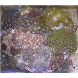 Aquacultured MultiRock