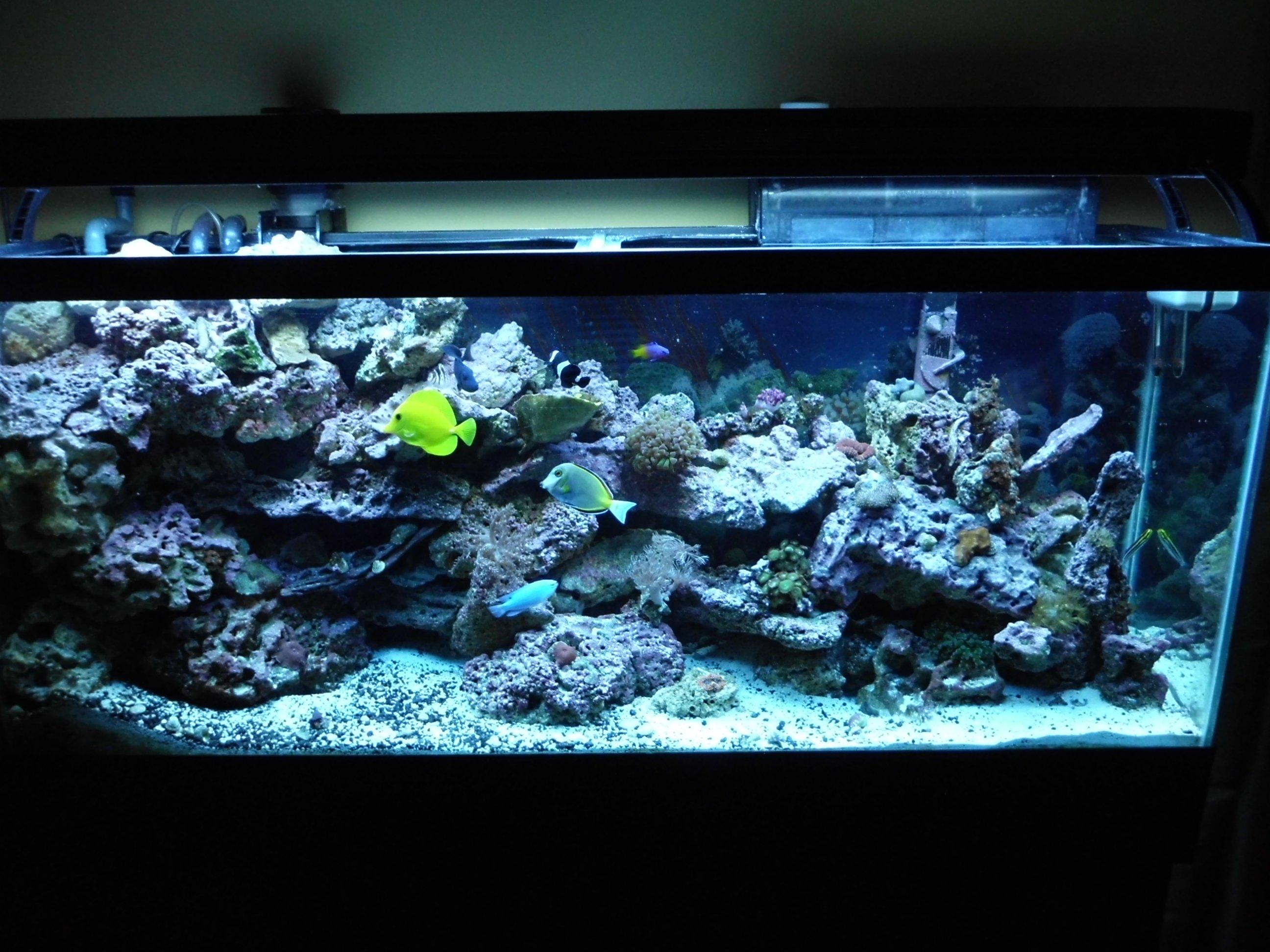 My 55gal reef tank one year old saltwaterfish forum for Saltwater tank fish
