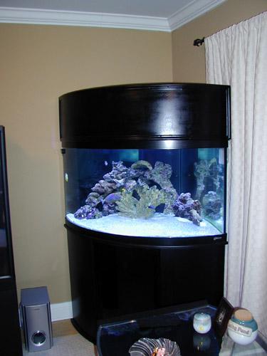 Gallon Corner Aquarium Ideas Jpg 375x500 92 Tank Dimensions