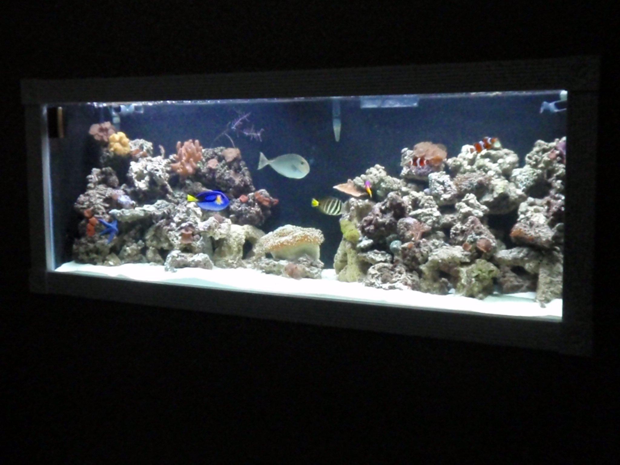 220 in wall reef tank saltwaterfish forum for 220 gallon fish tank
