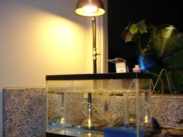 Ghost Shrimp Tank | Saltwaterfish com Forums for Fish Lovers!