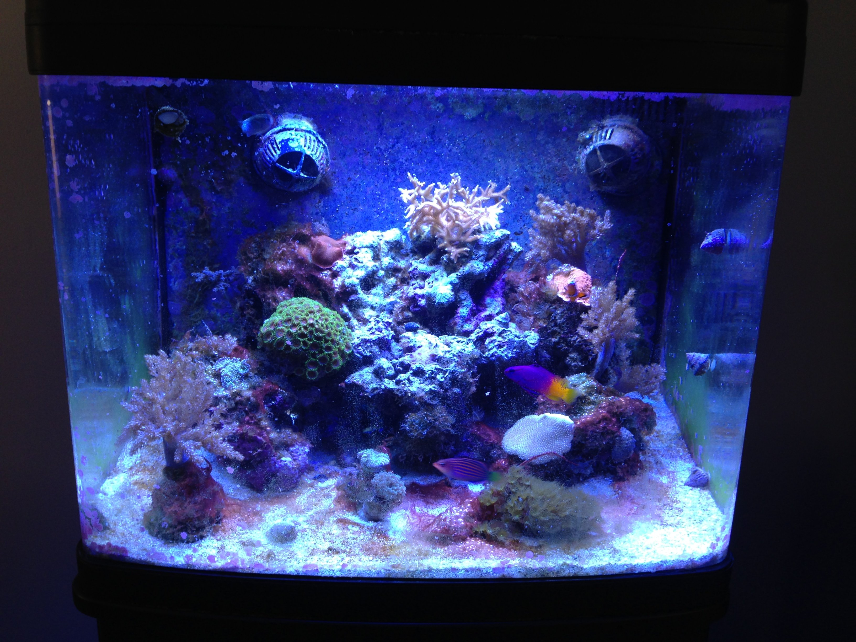 Freshwater fish tank alkalinity - Here Are The Current Tank Parameters Magnesium 1320 Phosphate 0 Ammonia 0 3 Nitrate 0 Calcium 420 79 Degrees Alkalinity 3 4 Ph 8 6 Salinity 1 0245