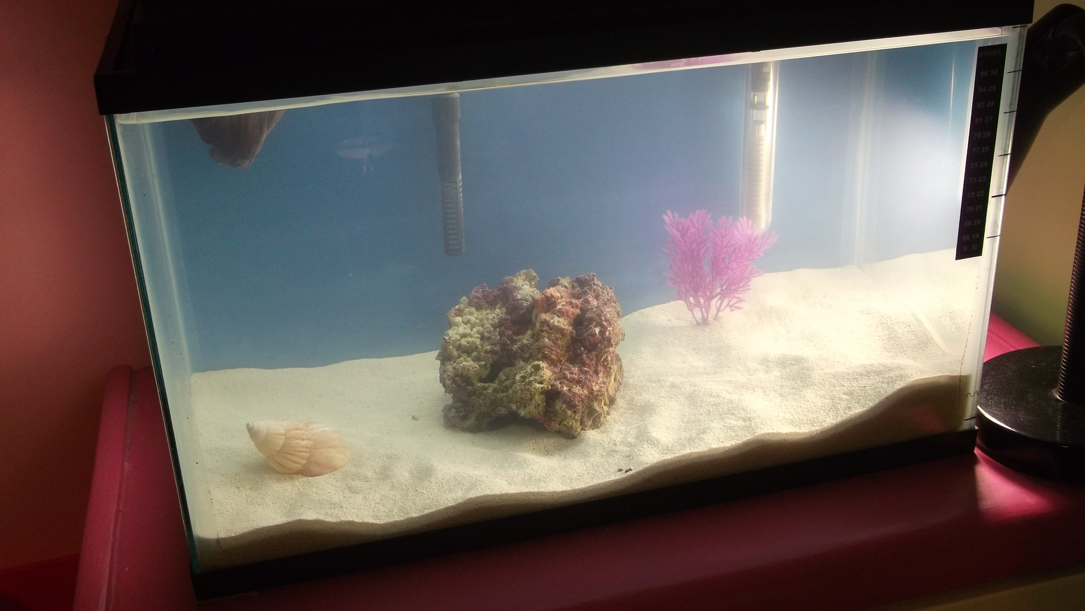 Starting a 10 gallon nano saltwater tank page 2 for Saltwater fish for 10 gallon tank