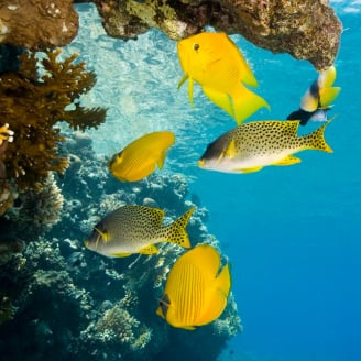Care For Christmas Tree Worm Rock Coral Saltwaterfish Com Forums
