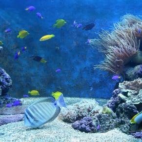 will an iodine dip kill aiptasia saltwaterfish com forums for