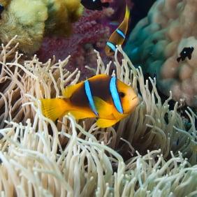 Aquarium Chiller for 100 Gallon tank | Saltwaterfish com