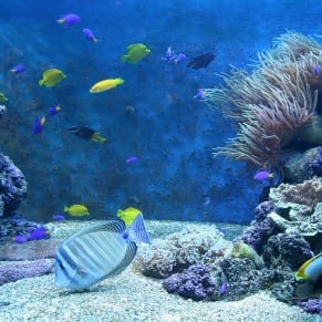 Cool 30g reef saltwaterfish forum for Cool saltwater fish