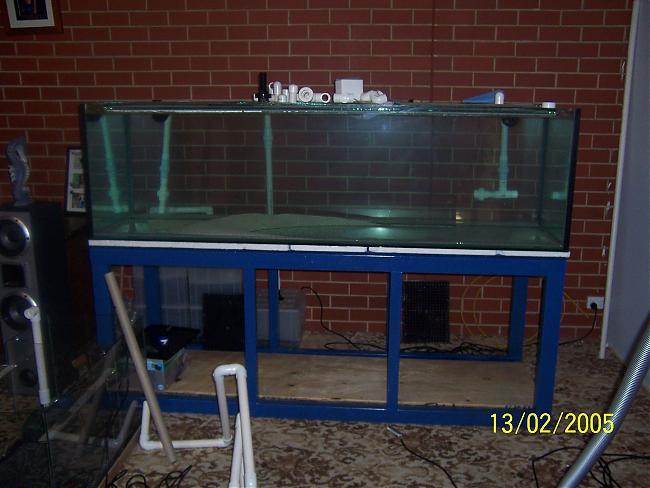 epaulette shark tank - photo #7