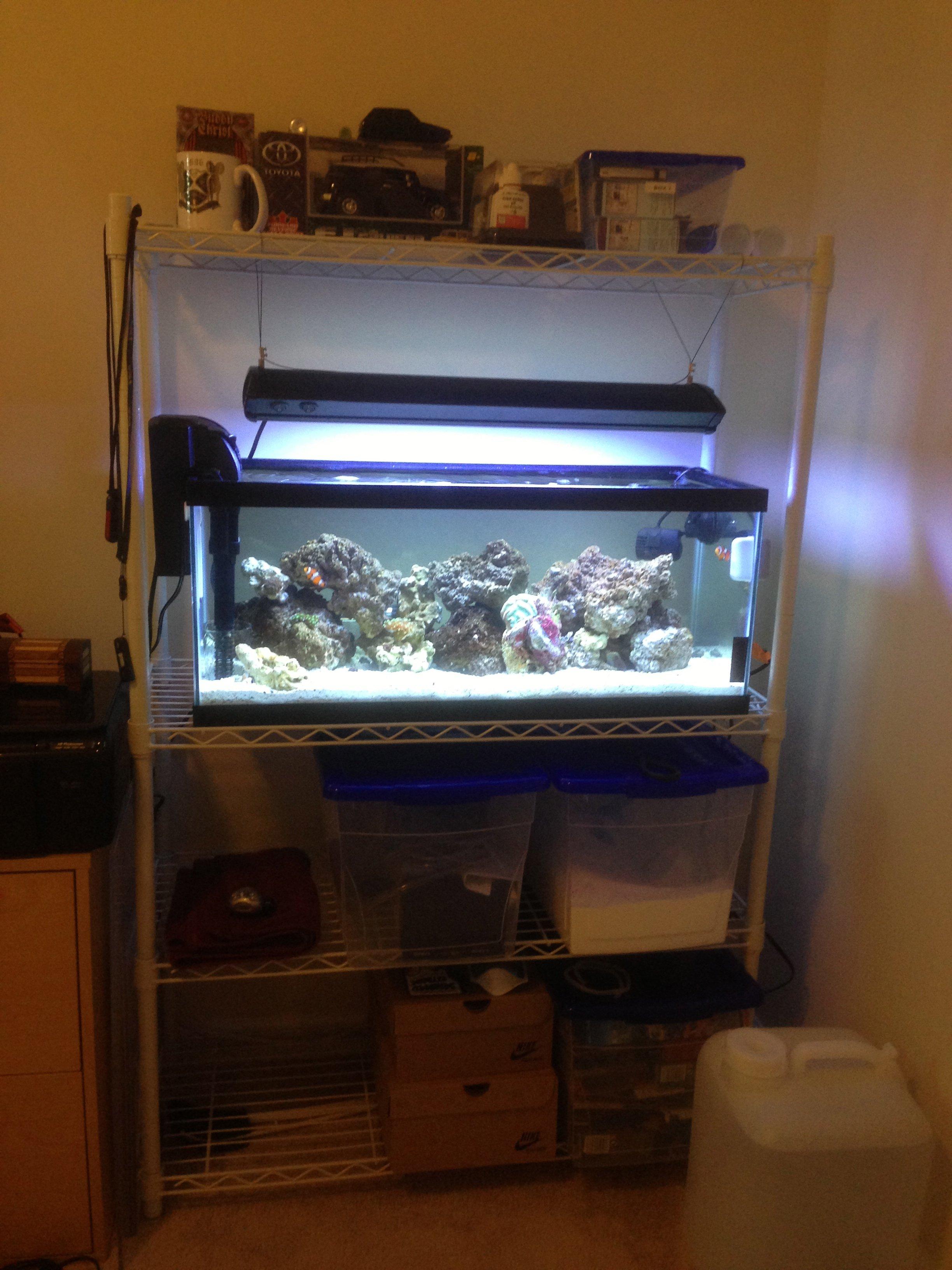 PlanemechFJ s 20Long Reef Tank