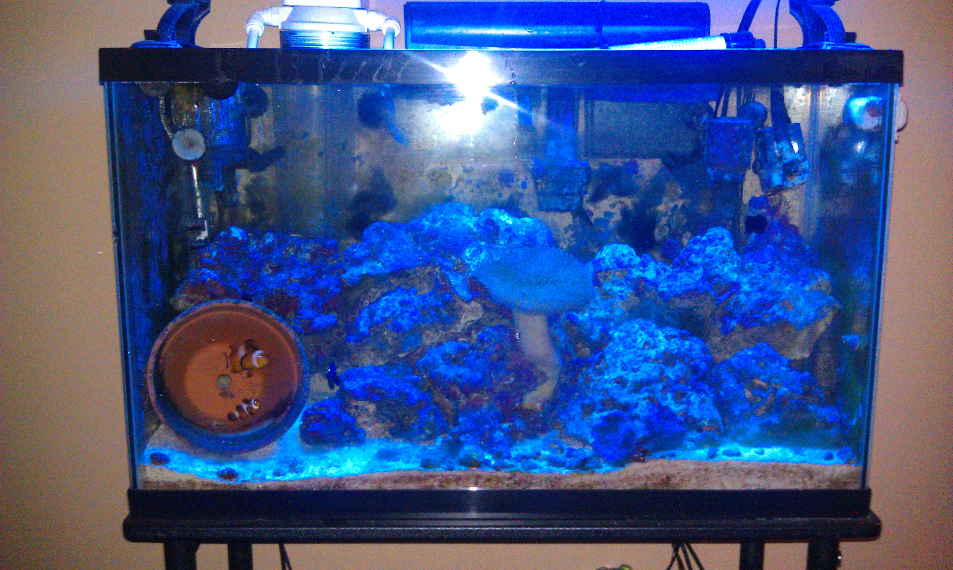 how to add saltwater fish to tank
