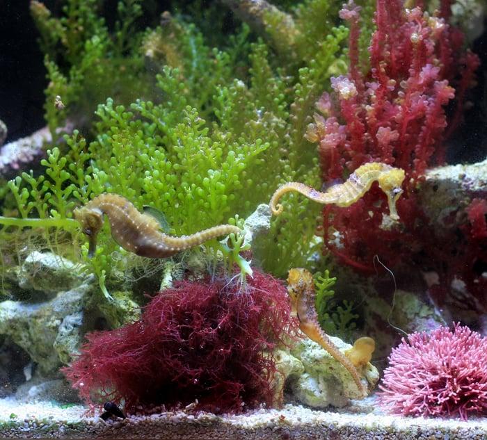 how to clean algae off aquarium rocks