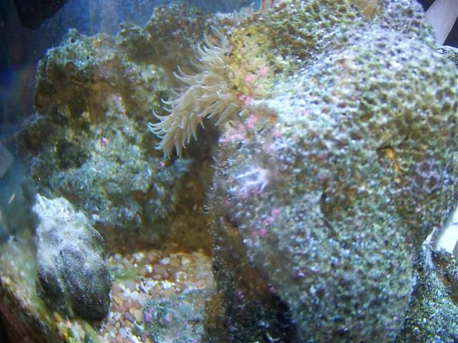 Growing white branches | Saltwaterfish Forum
