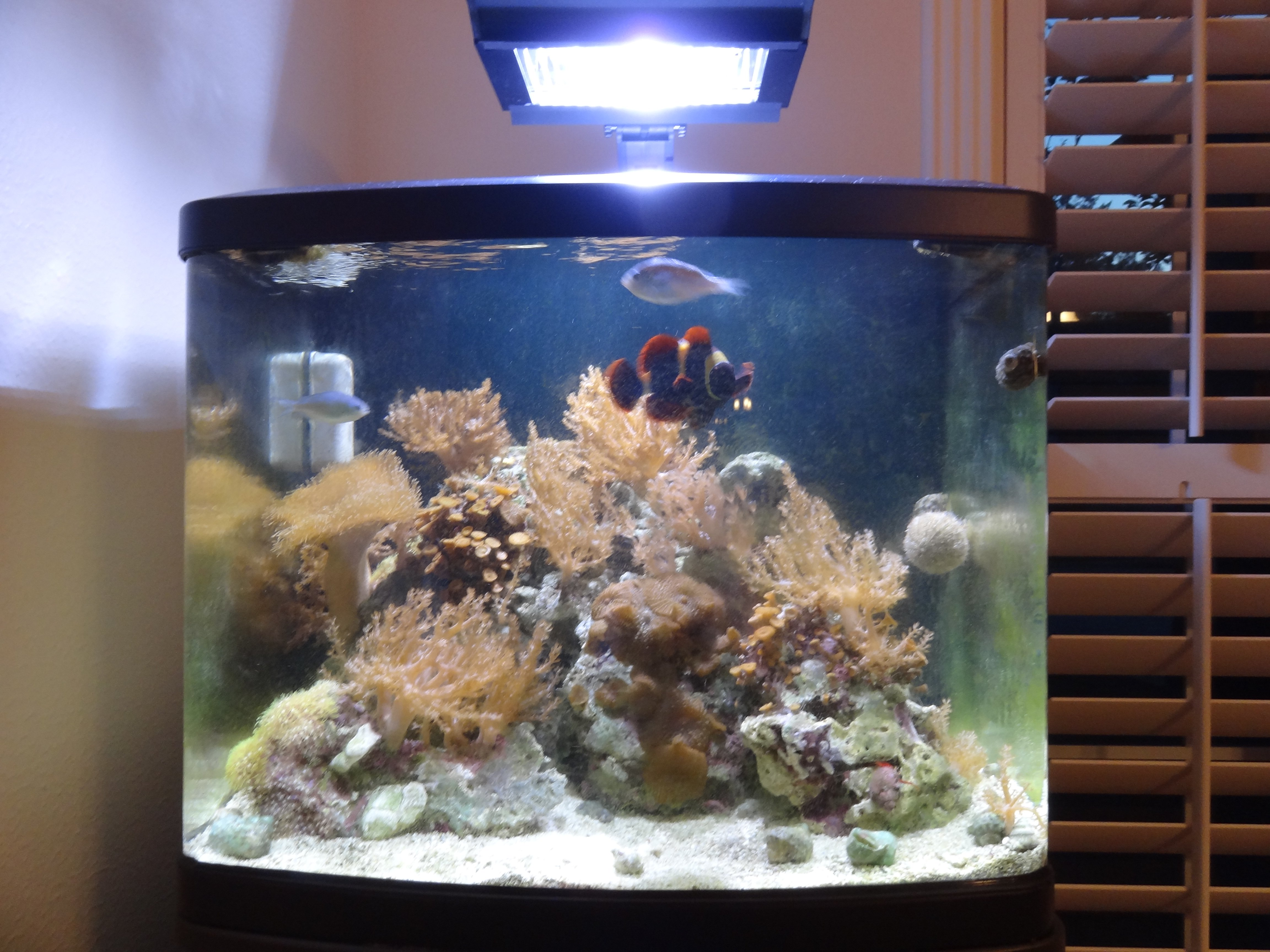 New 29 gallon biocube hqi with stand fish live rock and for Bio cube fish tank