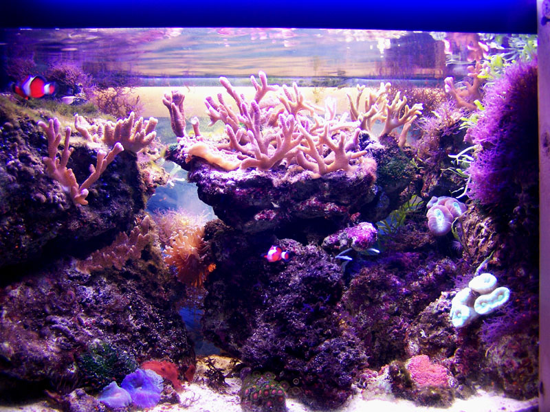 Starting a 10 gallon nano saltwater tank page 2 for Starting a saltwater fish tank