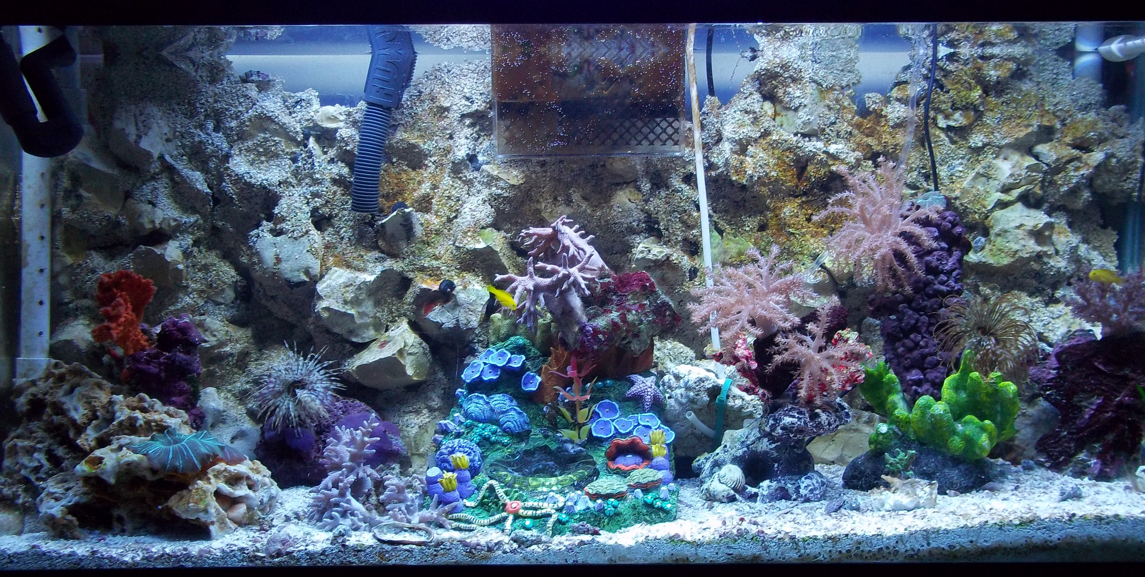 My seahorse tank update pictures saltwaterfish forum for Seahorse fish tank