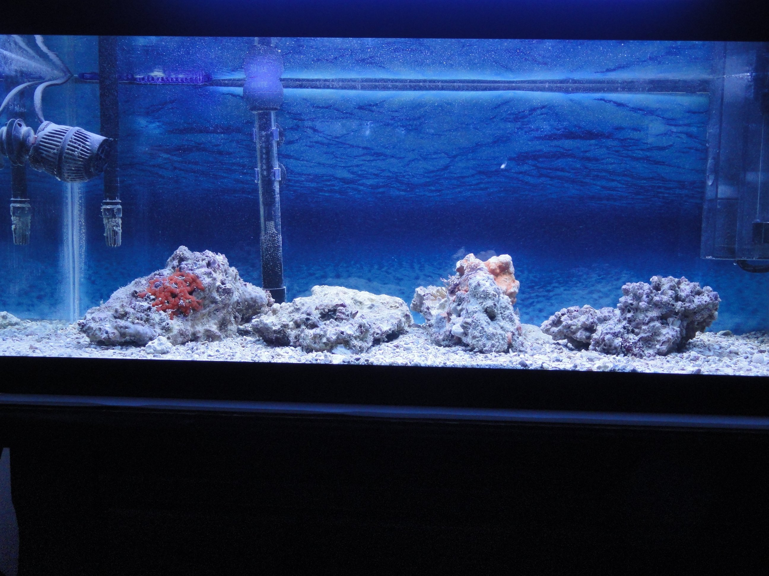 Saltwater fish tank 20 gallon tyler 39 s 20 gallon reef for How long is fish good for