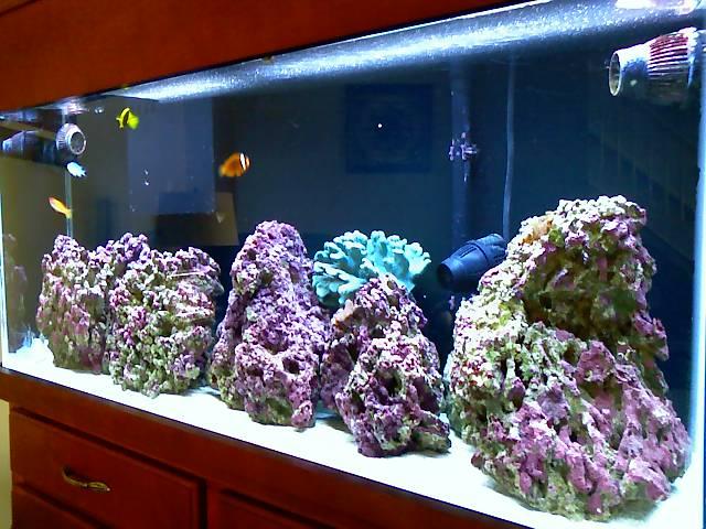 55 gal fowlr fts saltwaterfish forum for 55 gallon fish tank setup