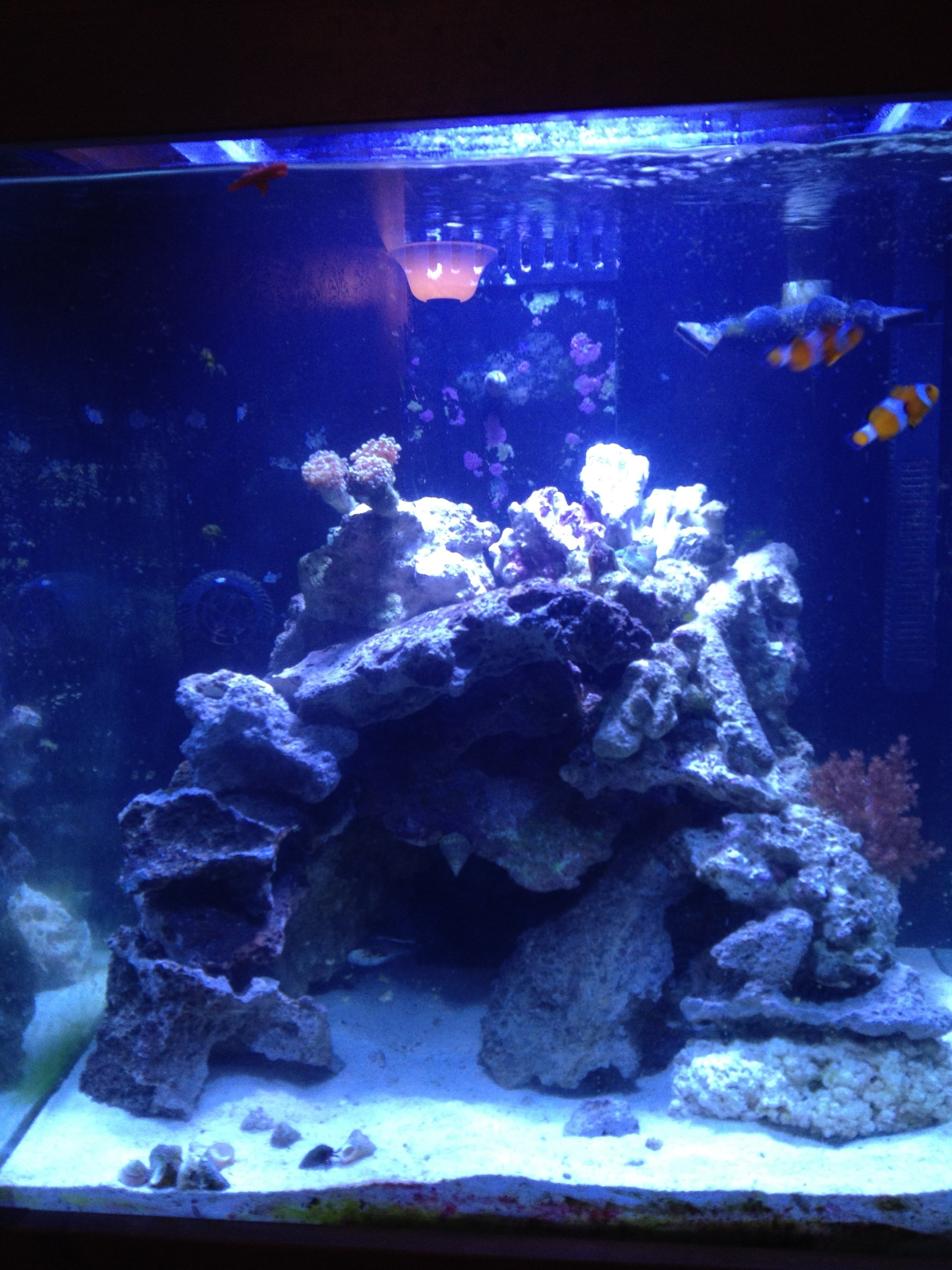 Aquascaping Tall Tanks - House of Things Wallpaper