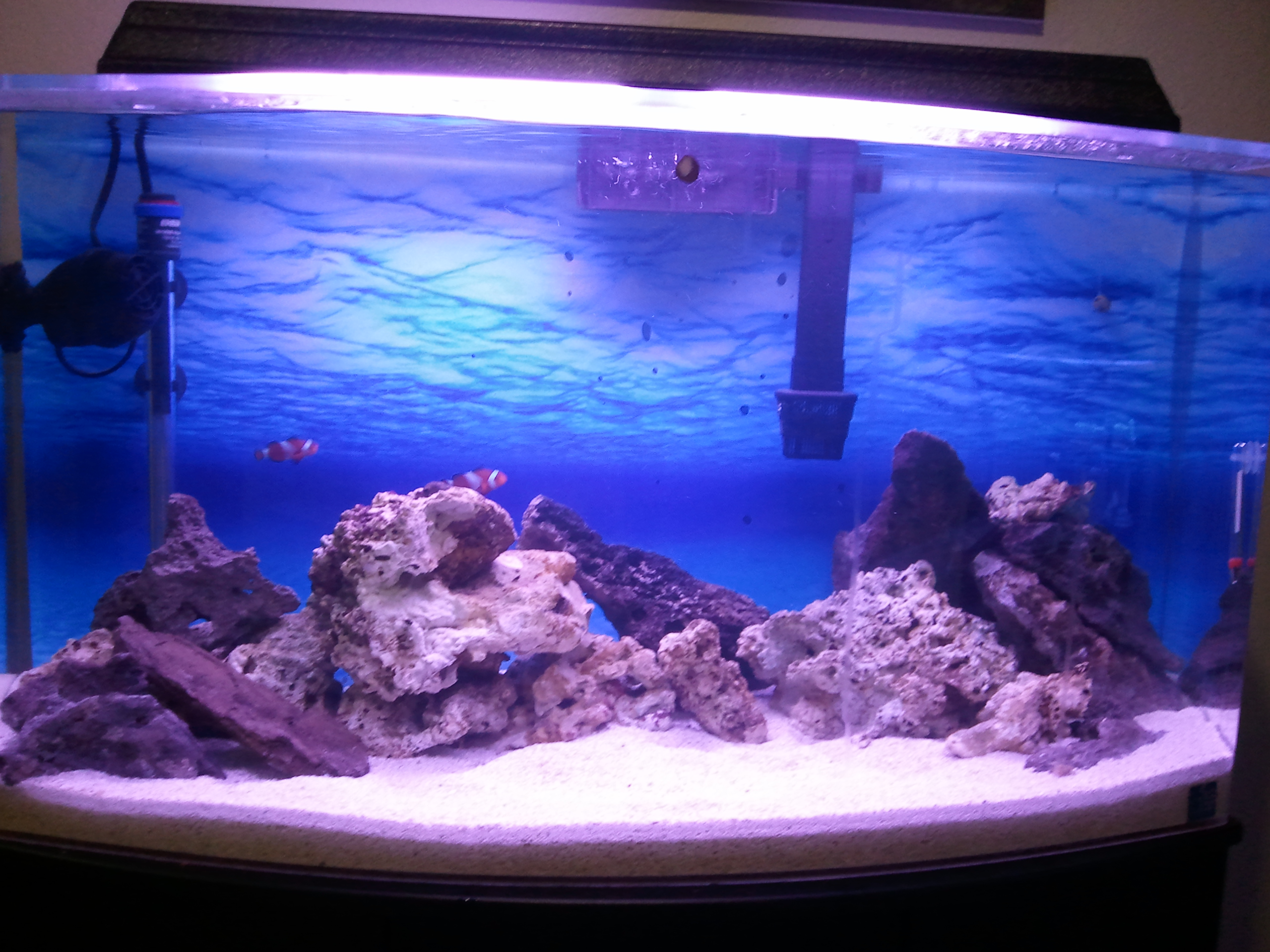 Saltwater tank 46 gallon 46 gallon reef tank fish for Saltwater fish for 10 gallon tank
