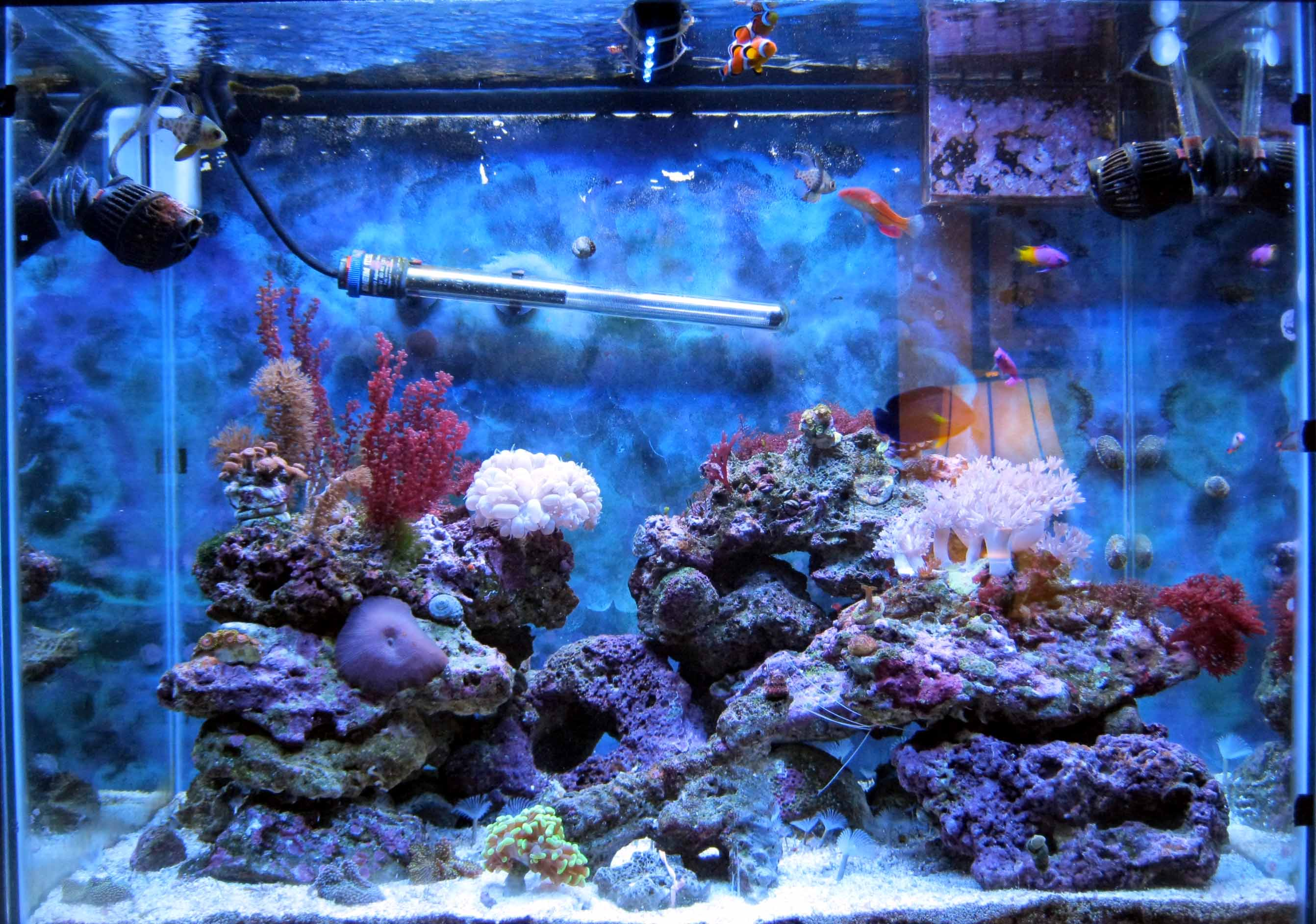 How much live rock would you re mend for my 55 gallon tank