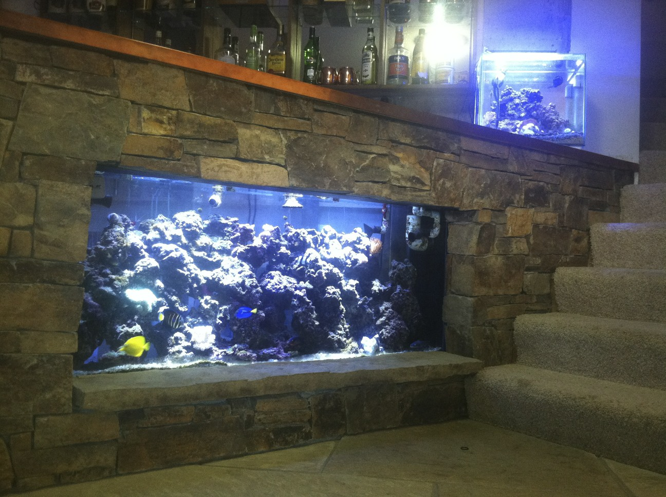 Fish Tank Bar Saltwaterfish Forum