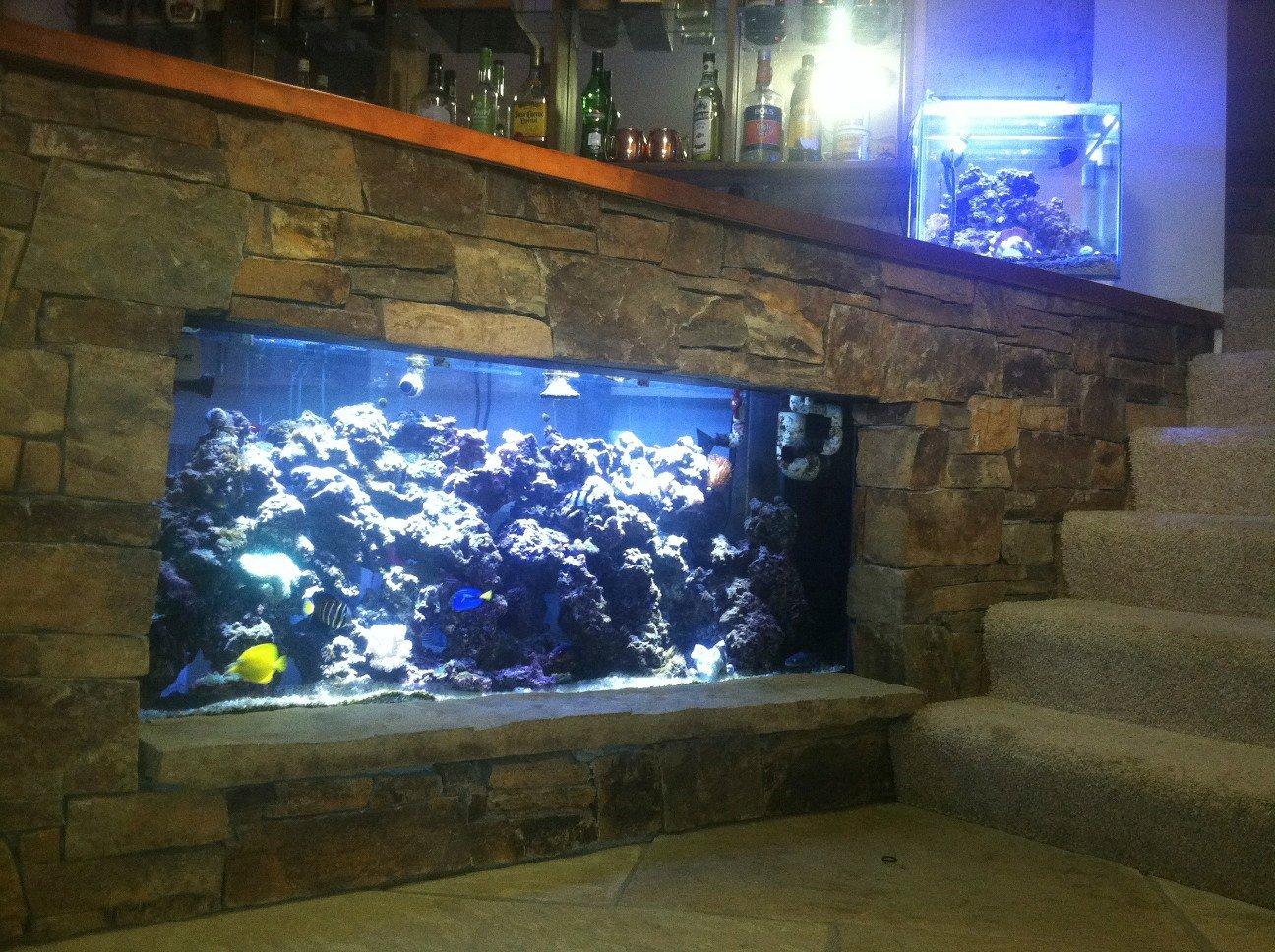 Fish Tank Bar Saltwaterfish Forum