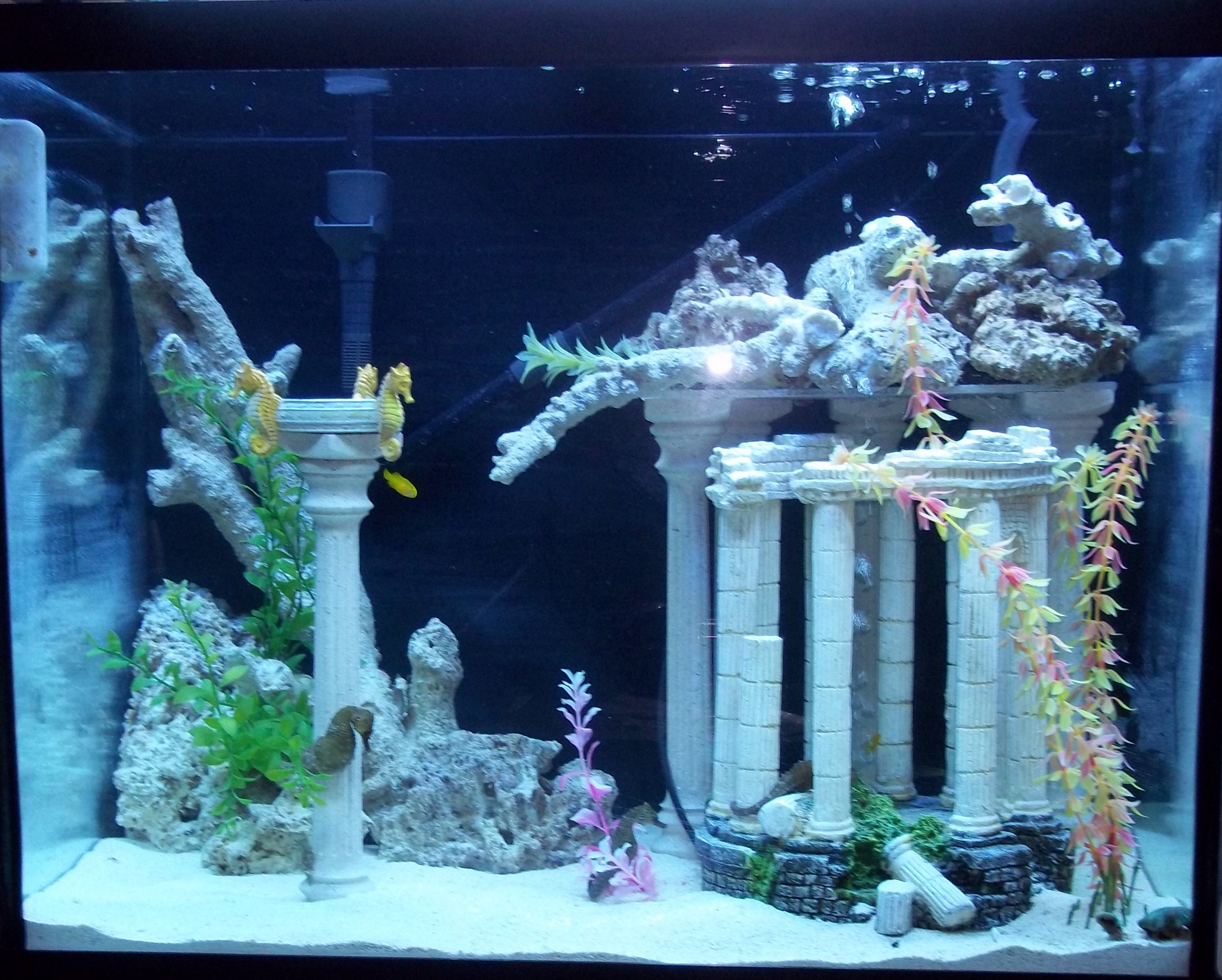 Well i just want picture of everyones tank just so i can for Aquarium decoration kits