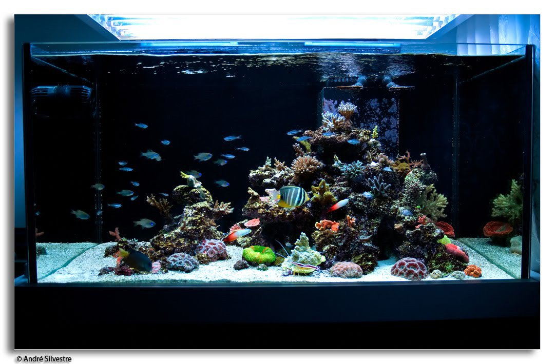 Aquscaping tips ideas saltwaterfish forum for Saltwater fish tank