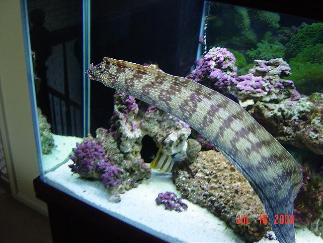 Some Of My Collection 240g Amp 75g Fowlr Saltwaterfish